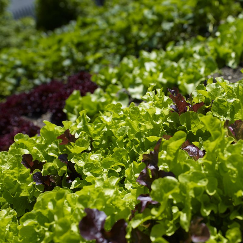 Hauseigener Gemüsegarten