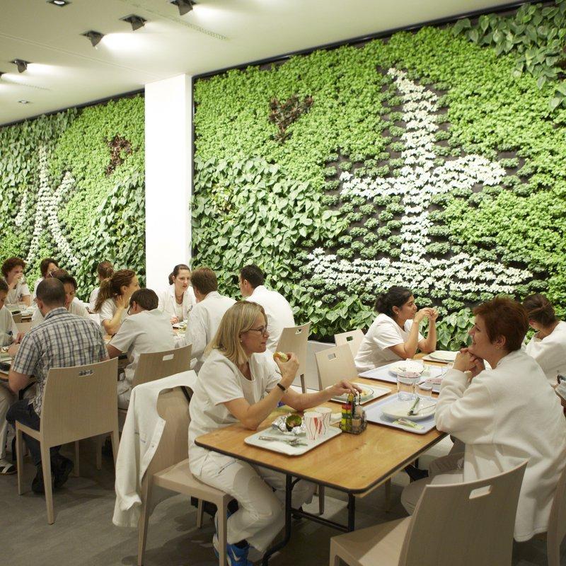 attraktive Pflanzenwand