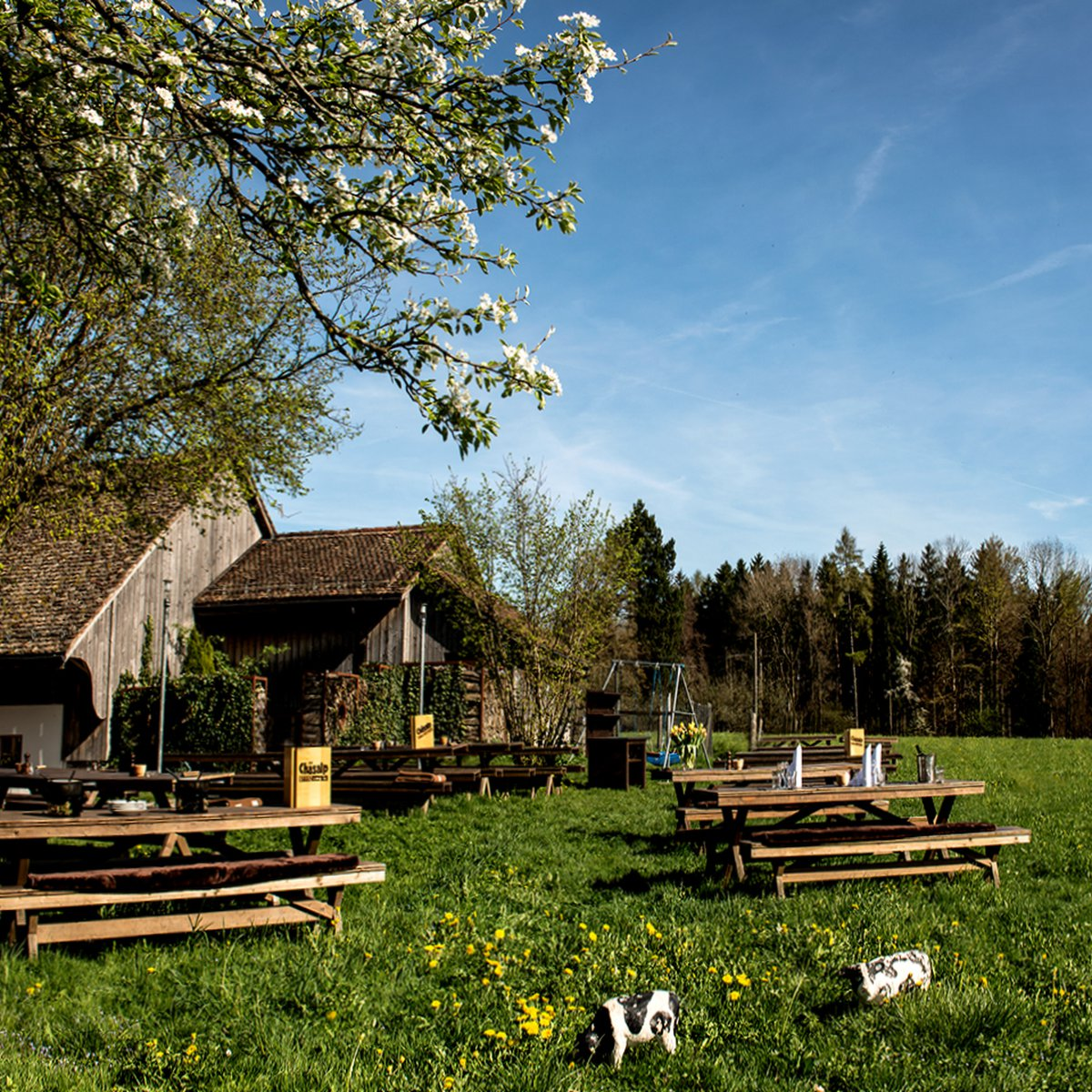 Chäsalp Garten