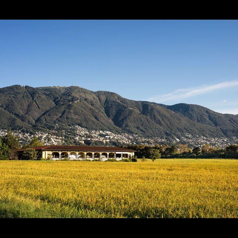 Castello del Sole, rice field