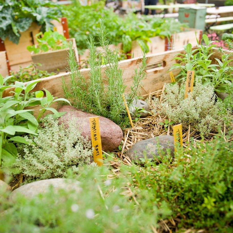 Garten 3