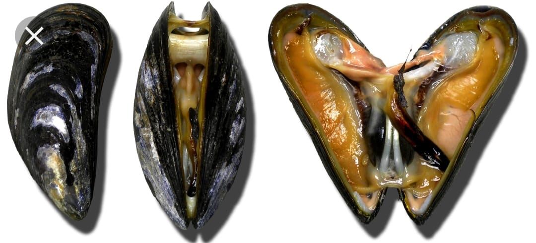 MOULES & STEINHAUER BROT
